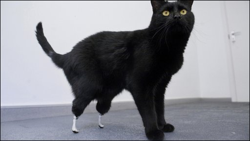 Vet Expert Dr Mike Petty Shares Tripawd  utation Pain Rehab Care Tips further 10 Years Of Fitzpatrick Referrals additionally 2014 together with Cat bionic further Bionic Cat Xray. on oscar bionic cat