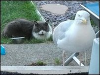 Pooh, a seagull, with a cat.