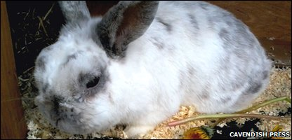 Barney the rabbit - before he was stolen