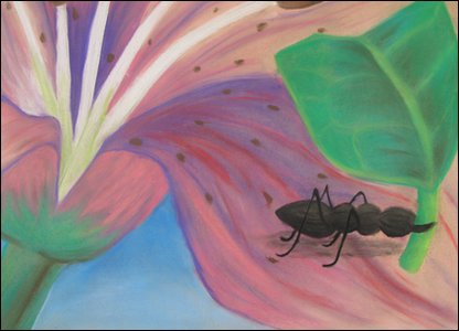 'The Small But Mighty Ant' by Emma, Hampshire (winner in 11-14 age group)