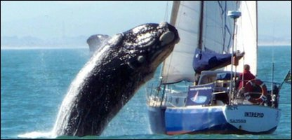 Whale jumping onto a boat