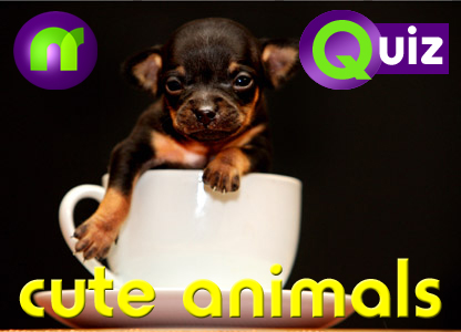 Cute animals quiz