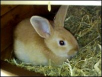 How Colin the rabbit looked before he had his ears burnt off
