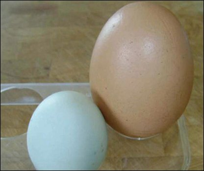 Rainbow's giant egg next to a normal-sized one