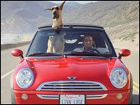 Phil, played by Lee Pace, in a car with Marmaduke whose head is sticking out the sunroof