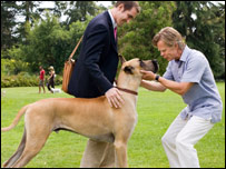 Marmaduke with his owner Phil, played by Lee Pace, and Phil's new boss, played by William H. Macy