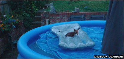 The fox cub stranded on a pool lilo