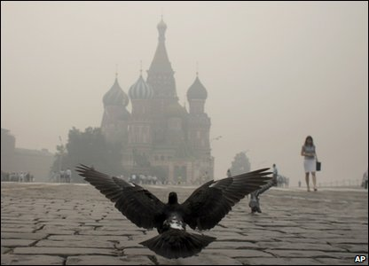 A dove in Red Square