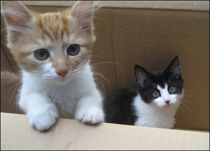 Two kittens who were found after being left in a box.