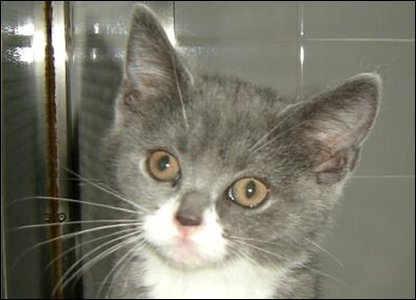 Eliza the kitten had been abandoned by her owner.