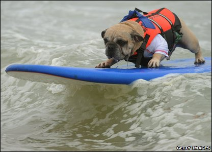 Dog Deagan surfing with style