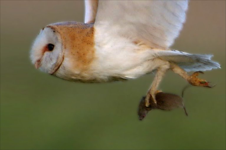 Bbc film by stephen de vere highlights oxfordshire wildlife for Food bar owl