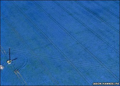 Linseed field in Buckinghamshire, England