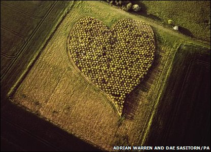 Heart-shaped wood of hawthorn trees in Wiltshire, England