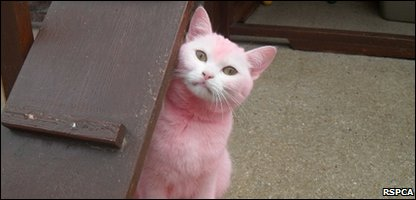 Pink the cat
