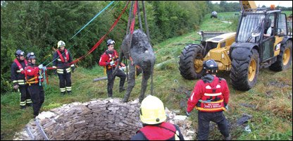Cow is rescued after falling down a well!