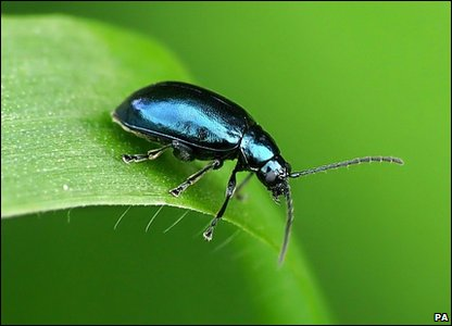 Beetle: Photo credit: Adam Hawtin/British Wildlife Photography Awards/PA Wire