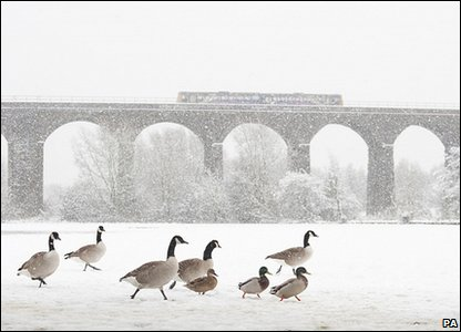 Canada geese: Photo credit: Terry Whittaker/British Wildlife Photography Awards/PA Wire