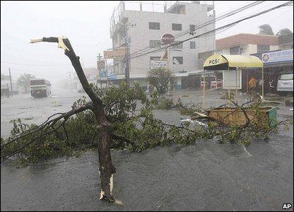 A tree that has been uprooted by the typhoon