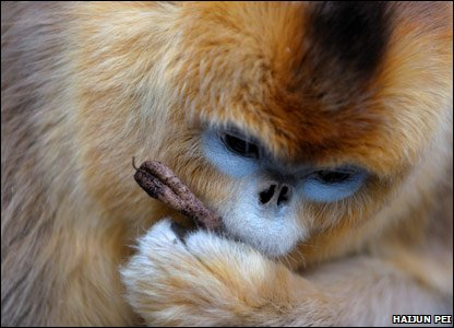 Monkey found in China's mountains.
