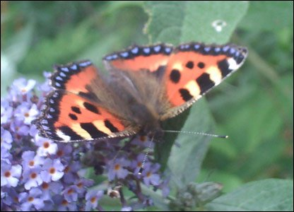 This butterfly snapshot was sent in by Sally, 13, who took it ner