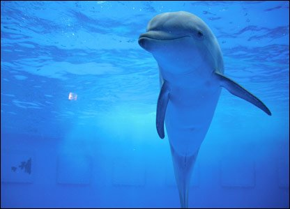 A dolphin at Barcelona Zoo, taken by 11-year-old Anna