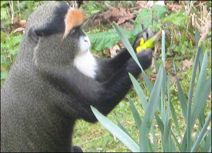 A monkey eating a flower at