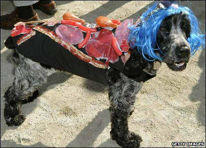 Dog dressed up as Lady Gaga, complete with meaty dress!