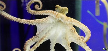 Paul II the new predicting octopus