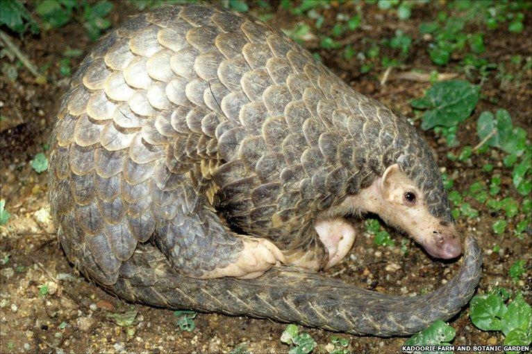 BBC - Earth News - Unique mammals struggling for survival