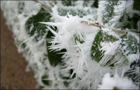 Emily's photo of frost on home to school in Scotland