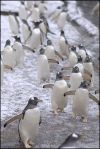 Penguins at Endinburgh Zoo