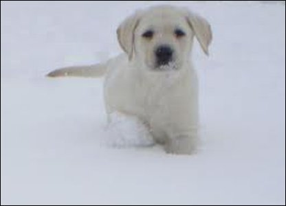 Robyn's puppy lacey out in the snow