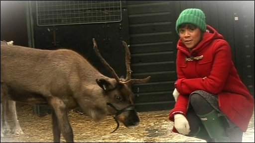 Reindeer and Leah