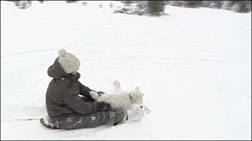 Dog snowboarding
