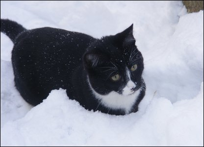 Meet Puss, all the way from snowy Southampton! Bassel snapped his new kitten exploring in the white stuff.