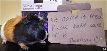 Lucky guinea pig with the note it was left with.
