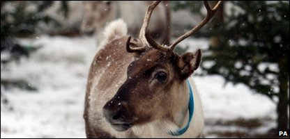 A reindeer like this was on the loose in Sunderland