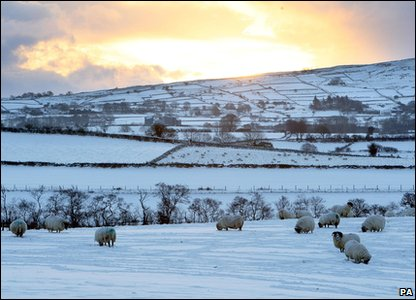 Sheep in a fields of snow in County Antrim, Northern Ireland.