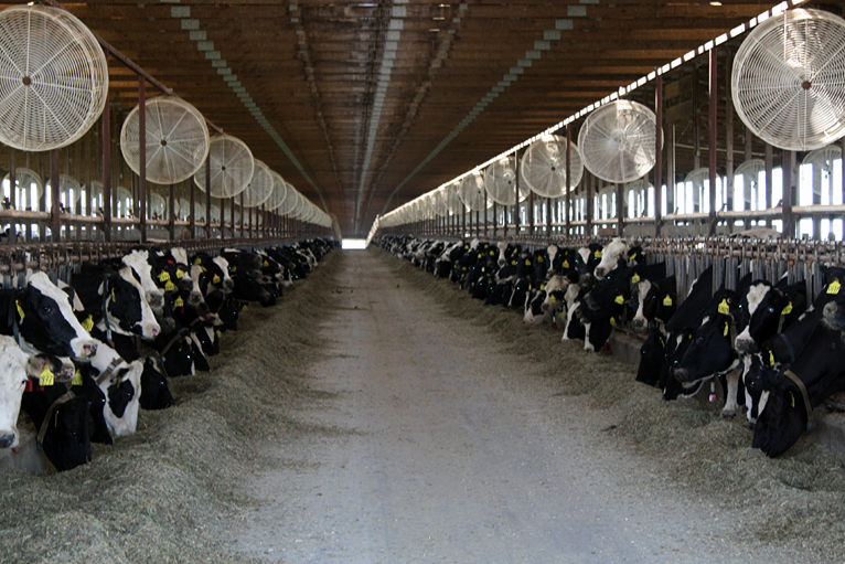 Bbc News Panorama In Pictures The Future Of Uk Dairy