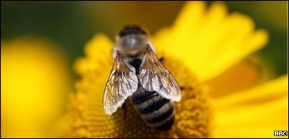 Study of bees by kids published in science magazine