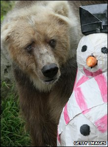 Bear plays with a snowman decoration at Taronga zoo in Australia.