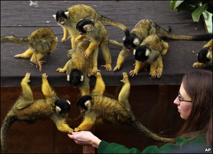 London Zoo annual animal count - squirrel monkeys