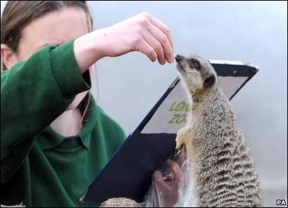 London Zoo annual animal count - meerkat