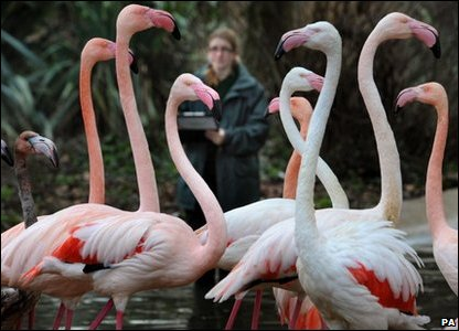 London Zoo annual animal count - flamingos