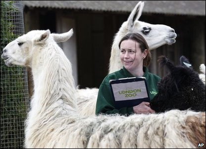 London Zoo annual animal count - llamas