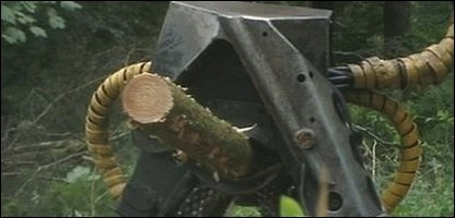 Tree being chopped down