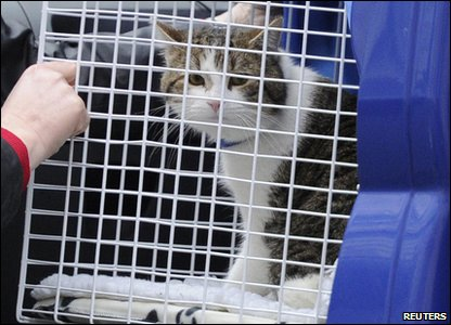 Larry the cat arriving at Downing Street.