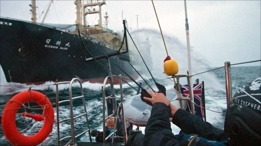 Whale activists try to stop the Japanese whaling ship