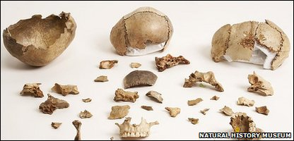 The scientists have three skulls in their collection from Gough's Cave